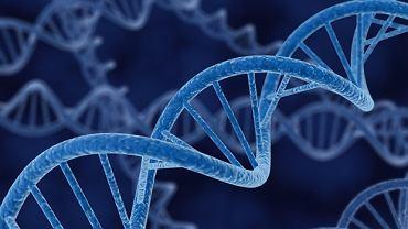 Zespół Blooma to szereg schorzeń wynikających z nieprawidłowości chromosomowych