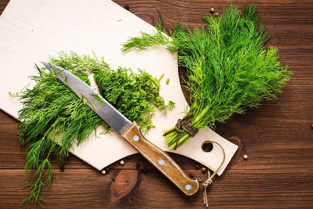 Kiedy siać koper ogrodowy, czyli wszystko, co musisz wiedzieć o uprawie koperku. Zdjęcie ilustracyjne