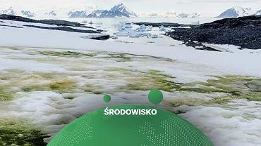 Wykwity alg na Antarktydzie. Zdjęcie wykonane 26 stycznia 2018 r.