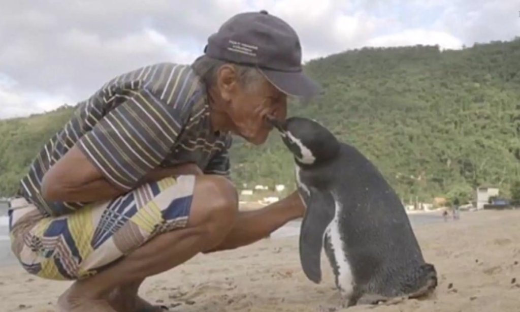 Pingwin Dindim i Joao Pereira de Souza