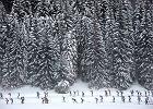 Bieganie zimą. Środki treningowe na śnieg uzupełniające bieganie zimą