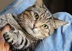 Choroba kociego pazura - czy jest groźna?