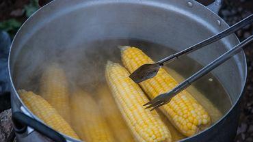 Jak ugotować kukurydzę, by wyszła doskonała? Zdjęcie ilustracyjne