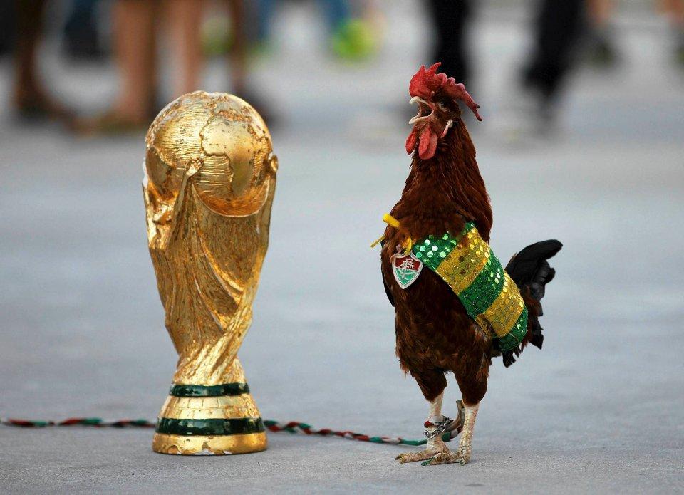 Kogut imieniem Fred obok repliki trofeum Pucharu Świata przed stadionem Maracana w Rio de Janeiro. Kogut został ubrany w pelerynę w barwach Brazylii z emblematem lokalnego klubu Fluminense. Replikę pucharu można kupić nie tylko w sklepach dla kibiców
