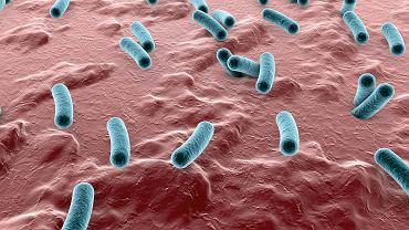 Bakterie w przewodzie pokarmowym