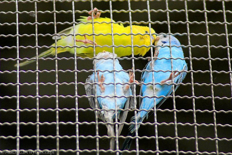 Woliera dla ptaków, Bulwar Wschodni, jest rok 2011