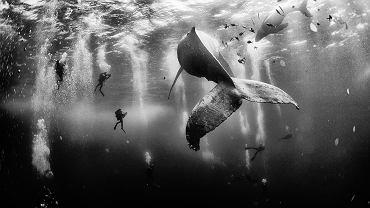 Nurkowanie z wielorybami
