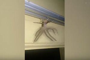 """W Indonezji nagrano dziwne stworzenie. Wygląda jak potwór z serialu """"Stranger Things"""""""