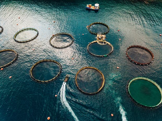 Łososie hodowane są u wybrzeży Norwegii, Grecji, USA, ale również krajów Ameryki Południowej i Chin