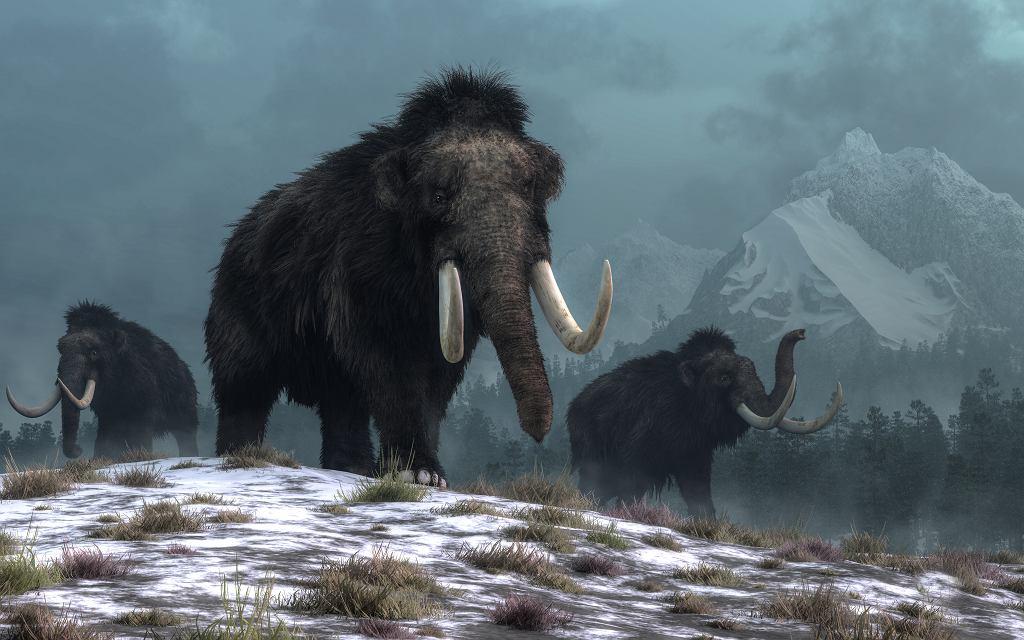 Mamut, zdjęcie ilustracyjne
