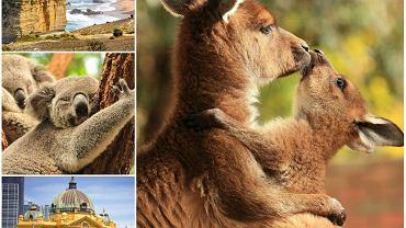 Randki safari sydney