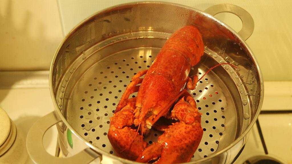 gotowanie homara