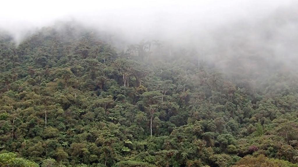 Las tropikalny w Kolumbii, gdzie polscy badacze chcą stworzyć prywatny rezerwat