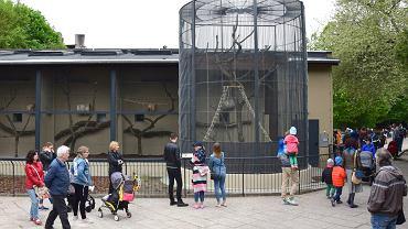 W Starym Zoo otwarto wyremontowaną małpiarnię