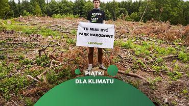 Puszcza Piska - akcja Greenpeace ws. ochrony starych lasów w Polsce