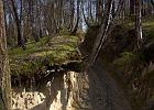 Bieg szlak trafi - 3 sierpnia w Kazimierskim Parku Krajobrazowym