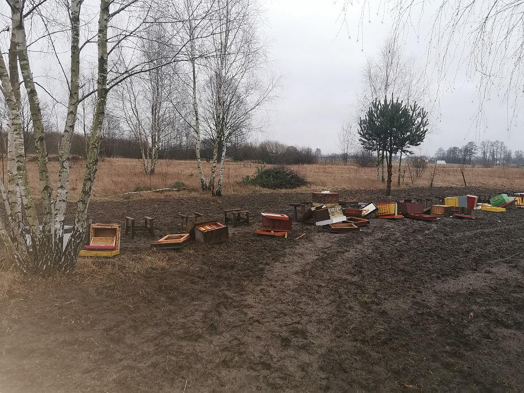 Zniszczone ule niedaleko Puszczy Kozienickiej