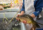 Dzięki dyskontom jemy coraz więcej ryb. Jakich najwięcej?
