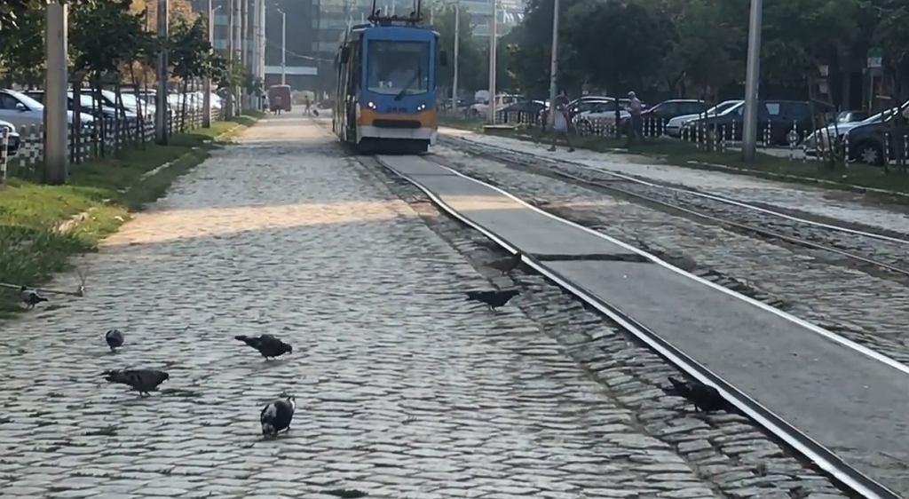 Bułgarscy aktywiści pokazują, jak wygląda transport publiczny w Sofii