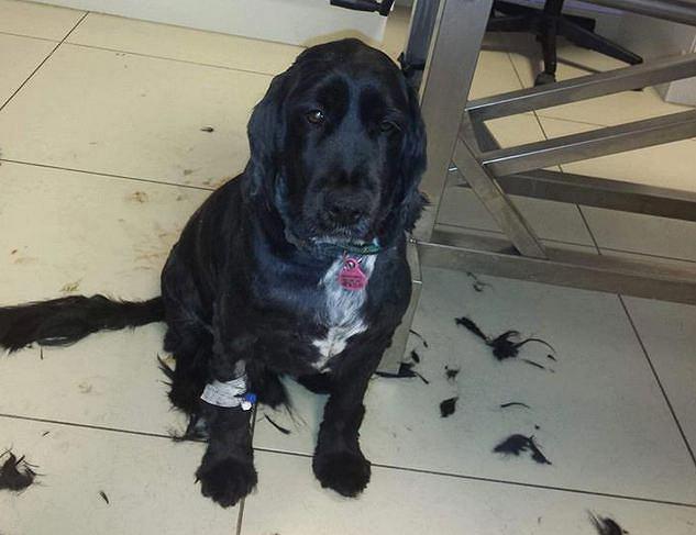 Fart - piękny pies, który przez zaniedbanie i niechęć właścicieli może zostać uśpiony