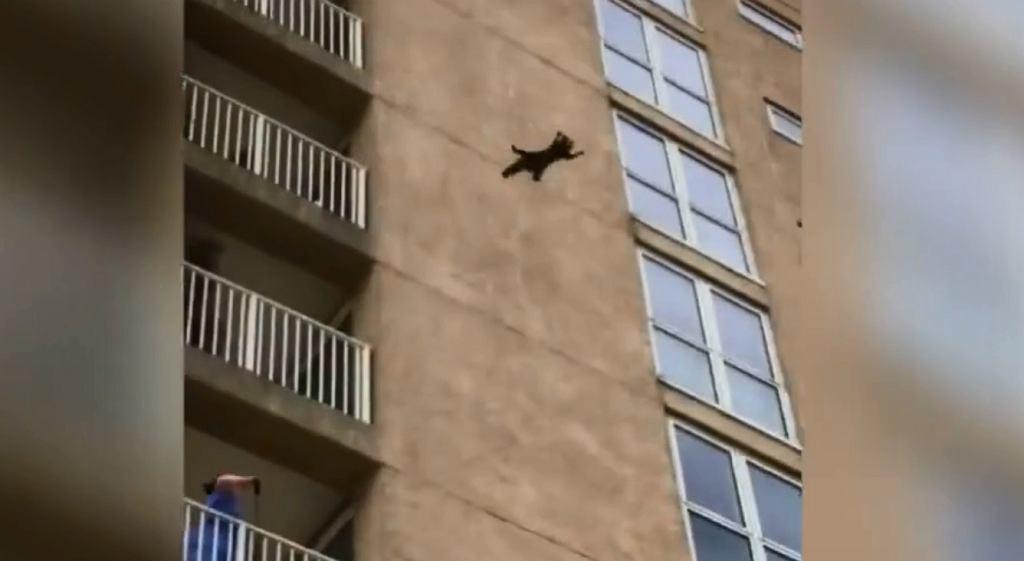 Szop pracz wspinał się na budynek i spadł z 9. piętra