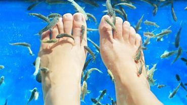 Coraz popularniejsze w naszym kraju zabiegi z wykorzystaniem rybek Garra Rufa zdaniem specjalistów są niebezpieczne dla zdrowia, a ich efekty lecznicze niepewne