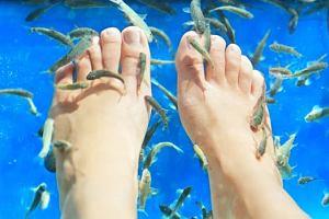 Sanepid ostrzega - modne zabiegi z użyciem rybek Garra rufa mogą być groźne dla zdrowia