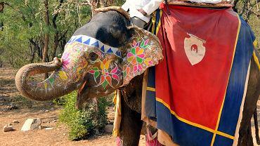 Haidt porównuje związek rozumu z moralnością do jeźdźca na słoniu. Jeźdźcowi się wydaje, że kieruje słoniem, ale tak naprawdę zatwierdza tylko jego wybory.  Cały tekst: http://wyborcza.pl/1,75400,16920843,Ile_z_pszczoly_jest_w_czlowieku.html#ixzz3IDufWe1V