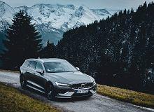 Wypożycz choinkę - pomysł Volvo na ekologiczne święta