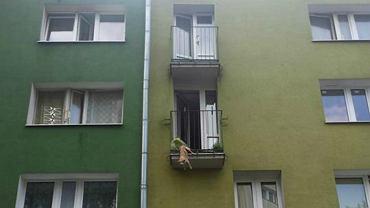 Pies zawisł na balkonie