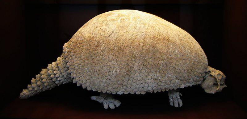 Zdjęcie numer 3 w galerii - Największe i najdziwniejsze - wymarłe ssaki