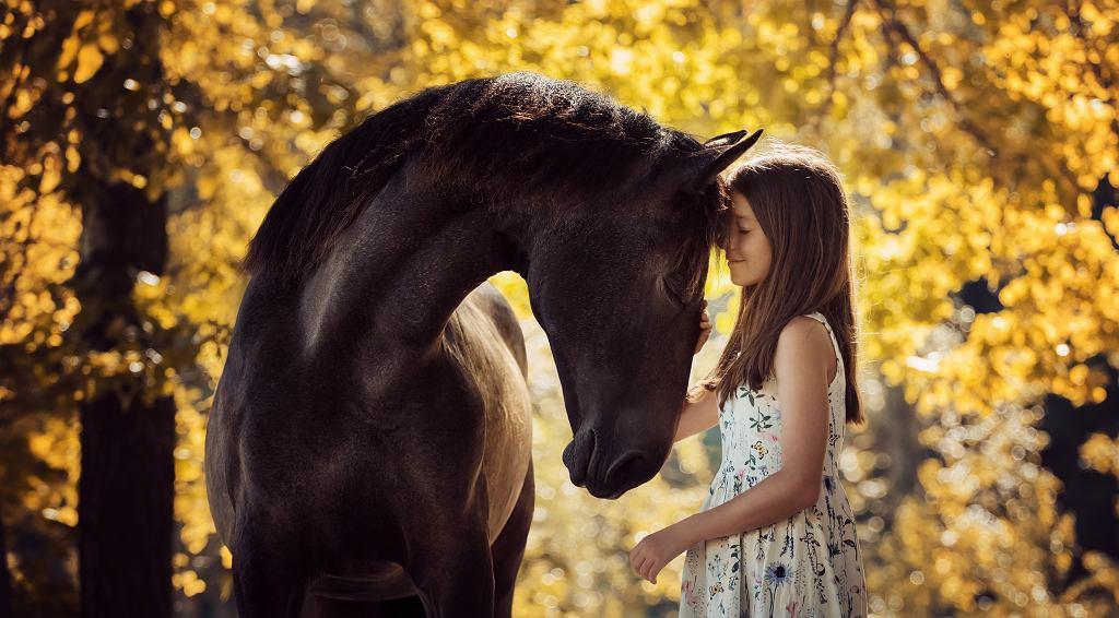 Filmy o koniach to często wzruszające historie o przyjaźni. Zdjęcie ilustracyjne, Alla-Berlezova/shutterstock.com
