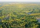 Orange ma sto hektarów lasu pod Warszawą. Trafiły na sprzedaż