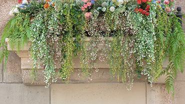 Sztuczne rośliny na balkon. Zdjęcie ilustracyjne