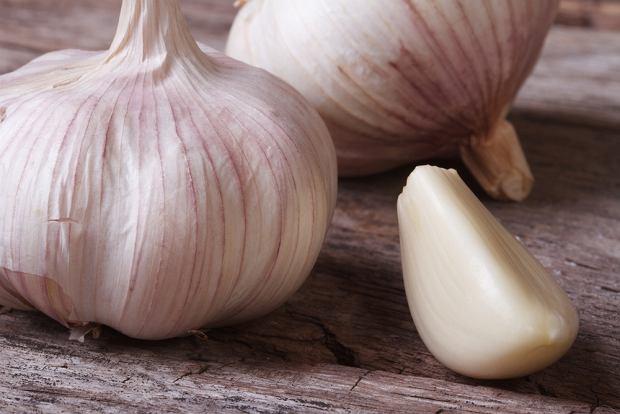 Czosnek galicyjski  ma wyjątkowo duże główki i duże ząbki, a także charakteryzuje się wysoką zawartością alliiny