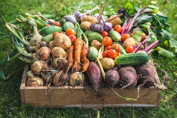 """Horrendalne ceny warzyw tej wiosny. """"Ludzie jeszcze się nie zorientowali, jak to wszystko podrożało"""""""