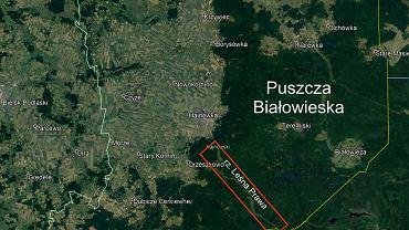 Państwowe Gospodarstwo Wodne Wody Polskie chce udrożnić koryto rzeki Leśnej Prawej, która przebiega przez Puszczę Białowieską
