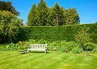 Zimozielony żywopłot. Jak zaprojektować idealne ''żywe ogrodzenie'' do ogrodu?