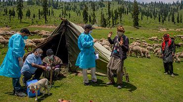 Pracownicy służby zdrowia namawiają na szczepionkę kaszmirskich nomadów.