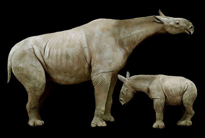 Zdjęcie numer 2 w galerii - Największe i najdziwniejsze - wymarłe ssaki