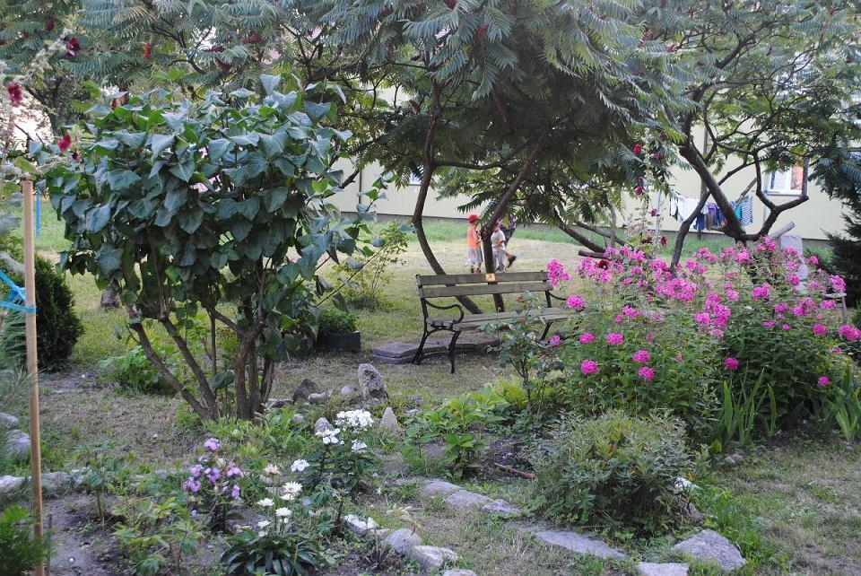 Przydomowe ogródki założone dzięki grantom z programu 'Zielona ławeczka'