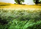 """Rząd podwyższył dopłaty w programie """"krowa plus"""". Będzie pomoc dla ekologicznych rolników"""