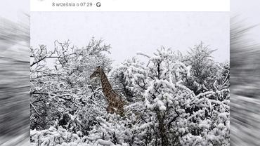 Śnieg w Afryce