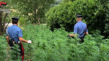 Włochy. Polacy założyli plantację marihuany pod Rzymem. Zostali aresztowani