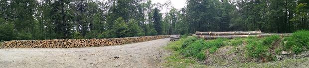 Wycinka w Puszczy Karpackiej