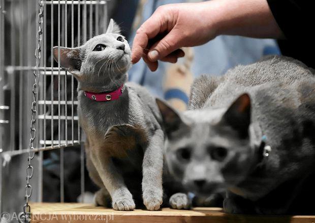 Koty święte i domowe. Jakie pojawią się na wystawie w Warszawie?