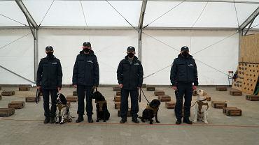 Ruszyły szkolenia psów. Będą wykrywać osoby zakażone koronawirusem