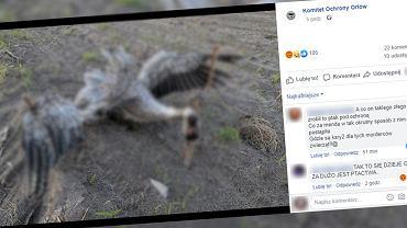 Mazowsze. Nieznany sprawca ukrzyżował żurawia