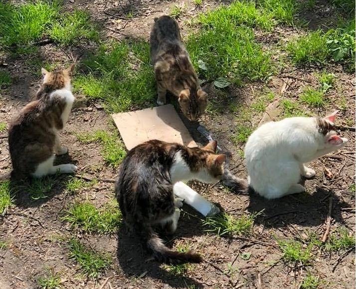 Koty z Nadodrzańskich Wałów