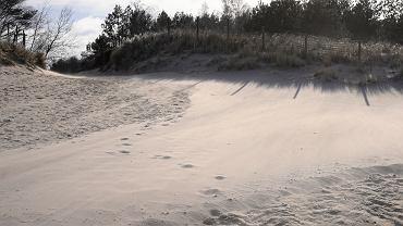 Martwe morświny znalezione w Dębkach i Łazach nad Bałtykiem